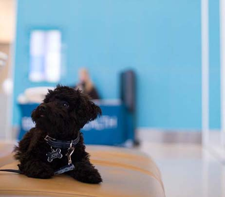 Therapy Dogs Provide Affection and Comfort to Patients at Eskenazi Health